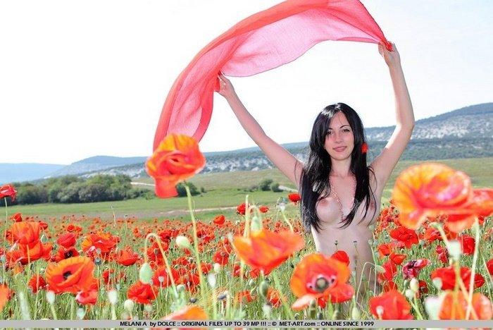 Эротический фотосет голой девушки среди цветущих маков